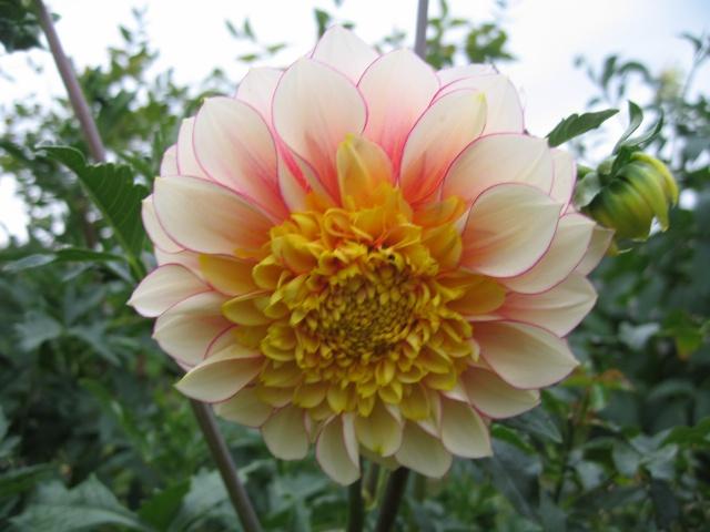 mon extérieur fleuris de mon chez moi lol - Page 5 Img_0540