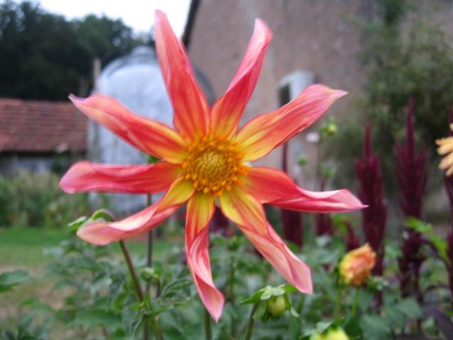 mon extérieur fleuris de mon chez moi lol - Page 5 Img_0541