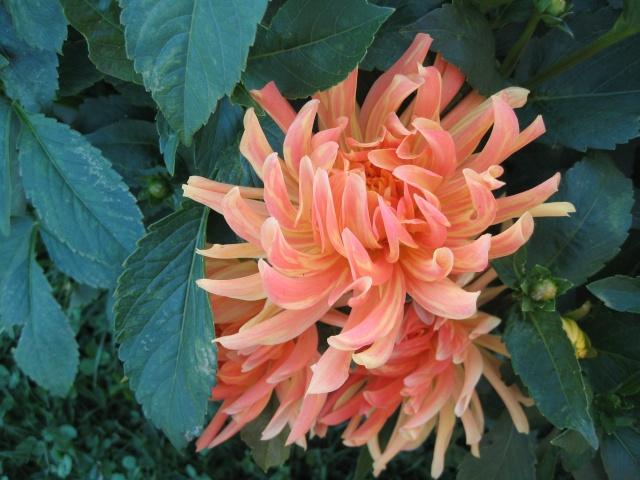 mon extérieur fleuris de mon chez moi lol - Page 5 Img_0615