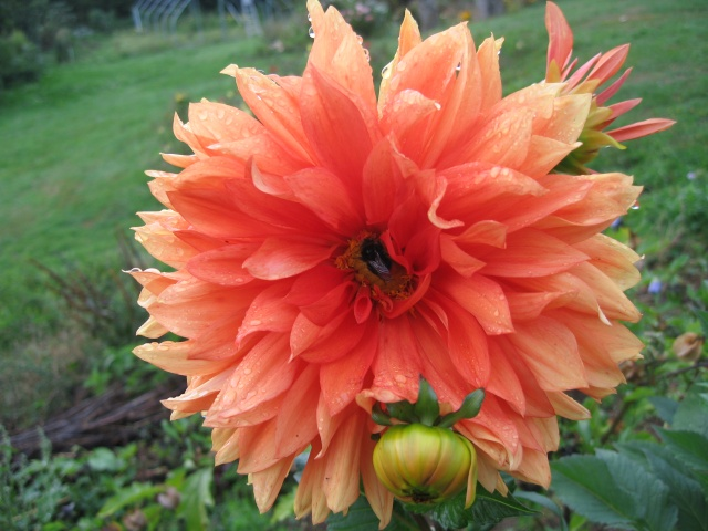 mon extérieur fleuris de mon chez moi lol - Page 5 Img_0618