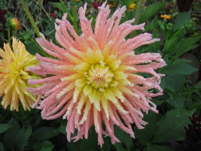 mon extérieur fleuris de mon chez moi lol - Page 5 Img_0619