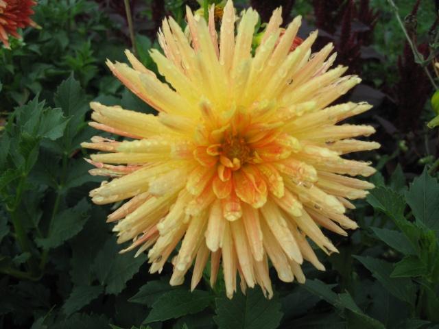 mon extérieur fleuris de mon chez moi lol - Page 5 Img_0620