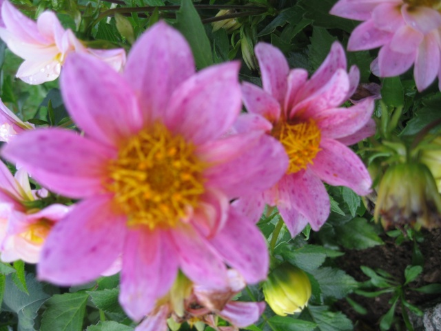 mon extérieur fleuris de mon chez moi lol - Page 5 Img_0621
