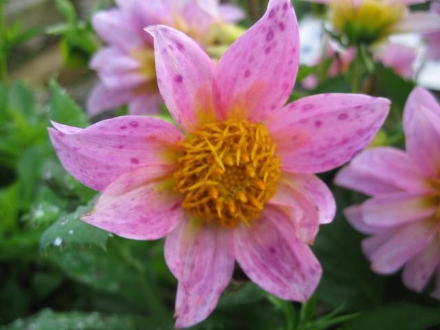 mon extérieur fleuris de mon chez moi lol - Page 5 Img_0623