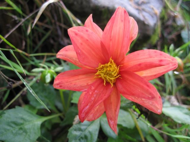 mon extérieur fleuris de mon chez moi lol - Page 5 Img_0624