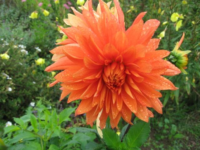 mon extérieur fleuris de mon chez moi lol - Page 6 Img_0628