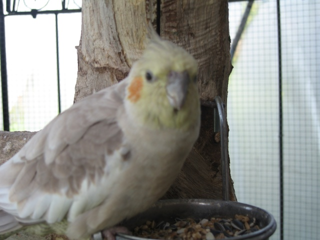 mes oiseaux exotique  Img_0715