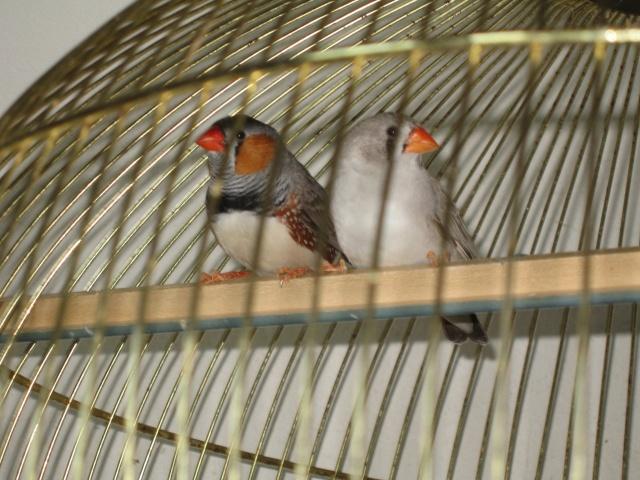 mes oiseaux exotique  - Page 2 Img_0718