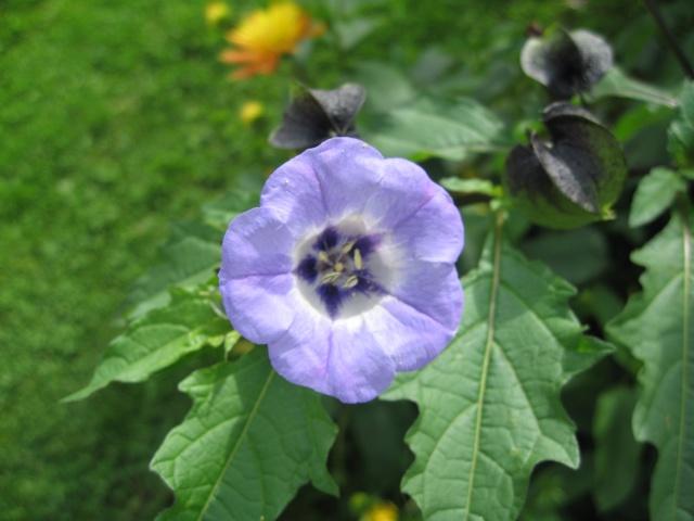 mon extérieur fleuris de mon chez moi lol - Page 8 Img_0737