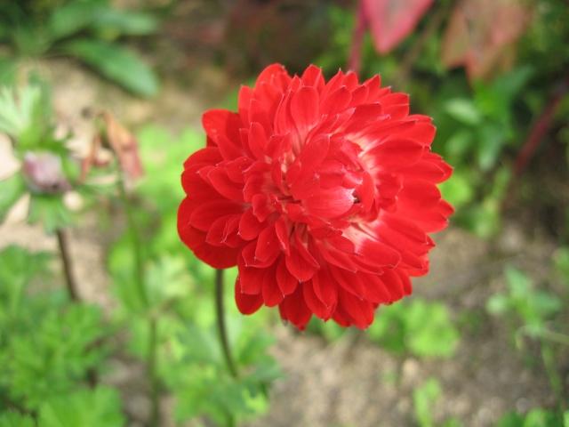 mon extérieur fleuris de mon chez moi lol - Page 8 Img_0738