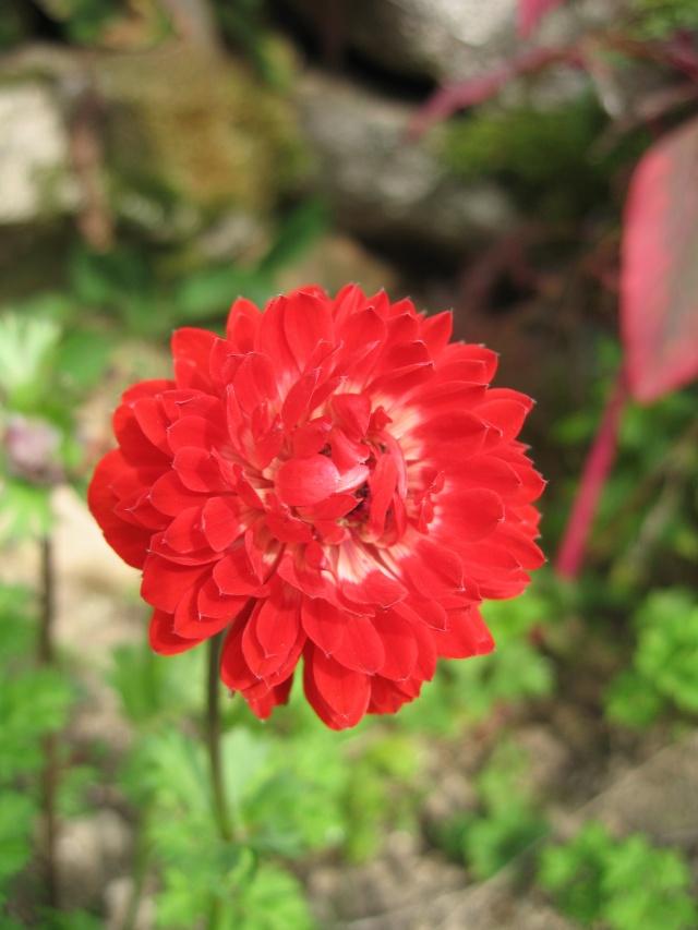 mon extérieur fleuris de mon chez moi lol - Page 8 Img_0739