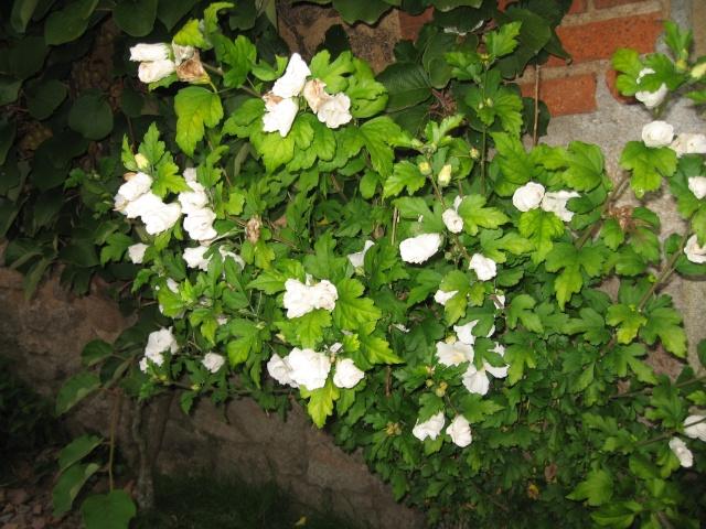 mon extérieur fleuris de mon chez moi lol - Page 8 Img_0740