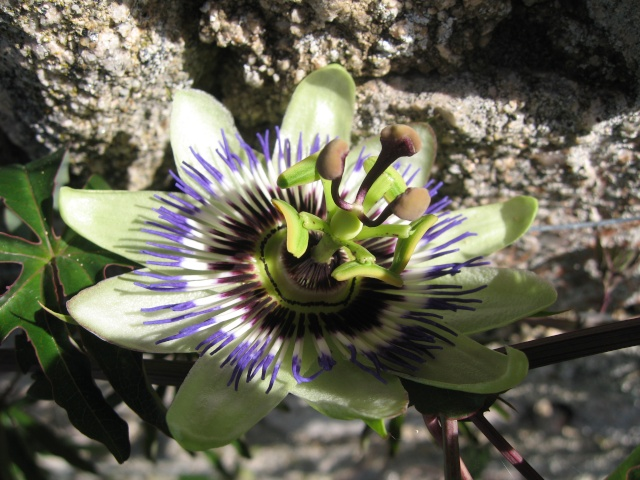 mon extérieur fleuris de mon chez moi lol - Page 8 Img_0742
