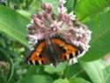 Thème du mois d'août 2013 : les insectes 4_16911