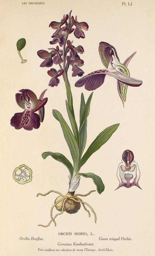 saison orchidophile 2015 33734510