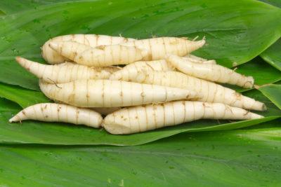 Maranta arundinacea (test de résistance des tubercules) Arrowr10