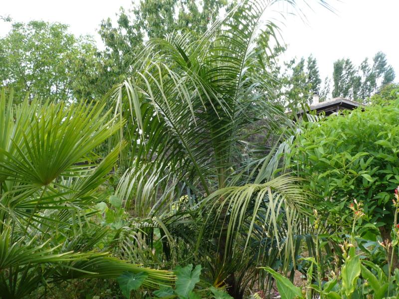 Jardin guiziérois P1000341