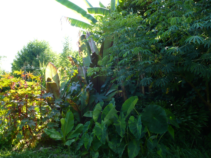Jardin guiziérois P1000449