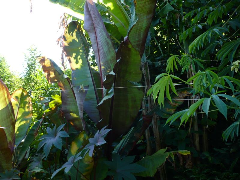 Jardin guiziérois P1000452
