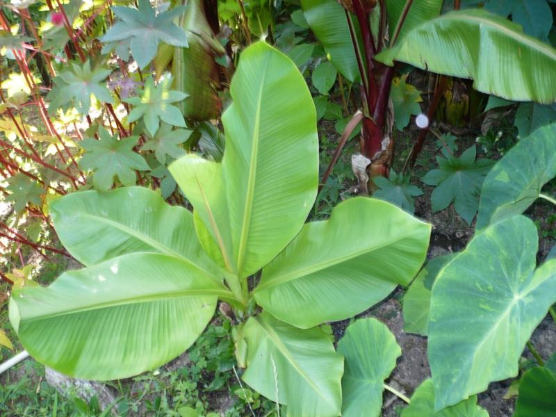 Jardin guiziérois P1000453