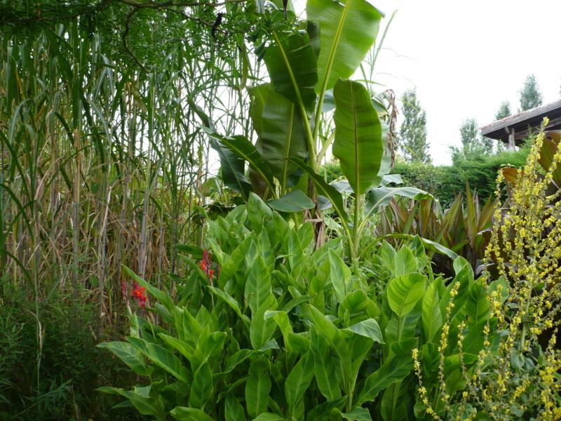 Jardin guiziérois P1000455