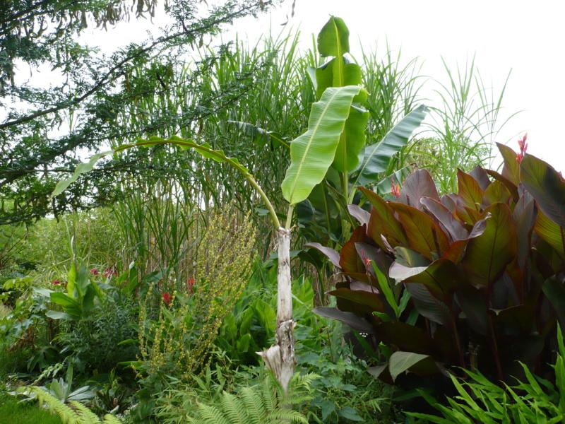 Jardin guiziérois P1000456