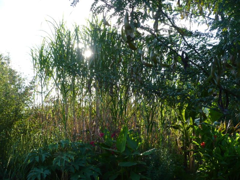 Jardin guiziérois P1000458