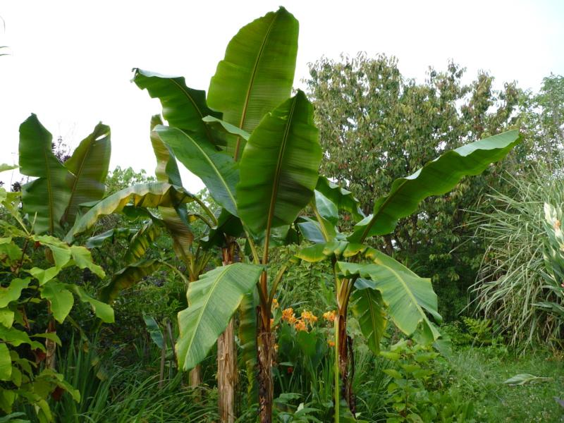 Jardin guiziérois P1000459