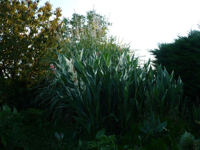 Jardin guiziérois P1000461