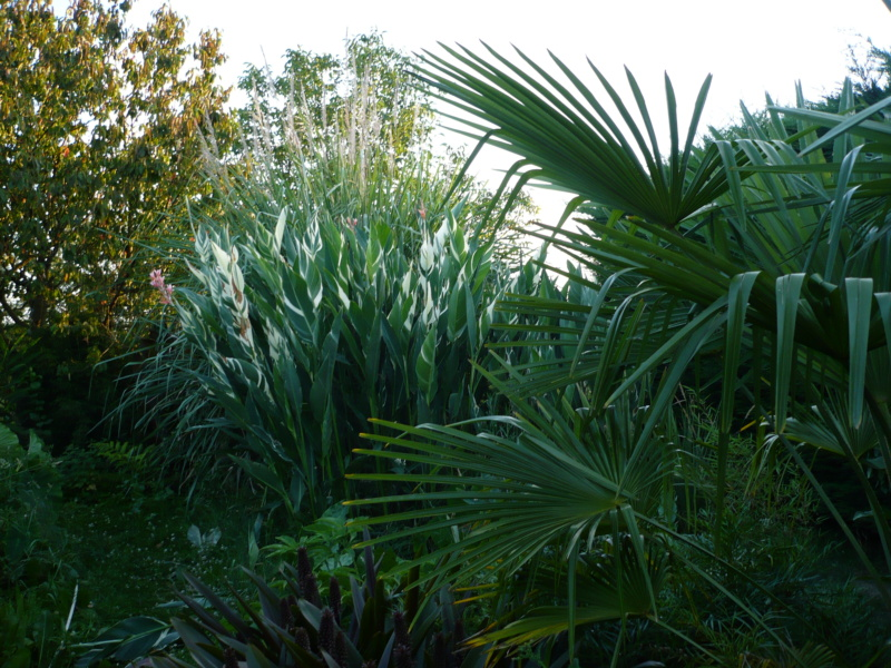 Jardin guiziérois P1000462