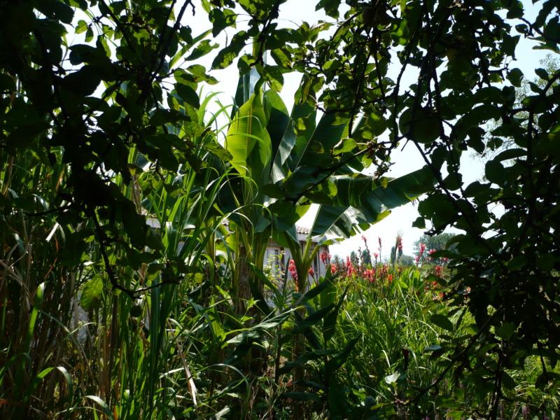 Jardin guiziérois P1000463