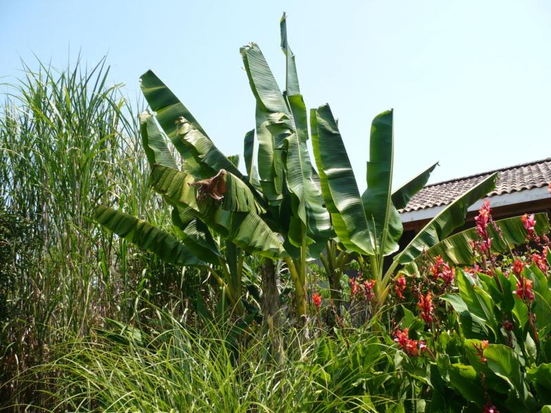 Jardin guiziérois P1000464