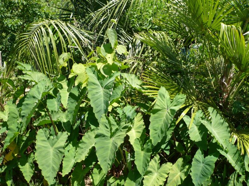 Jardin guiziérois P1000465