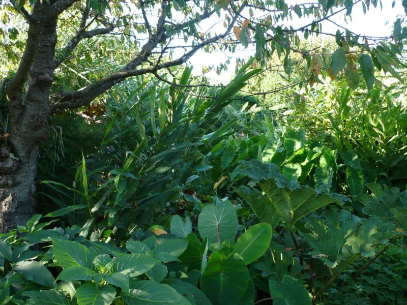 Jardin guiziérois P1000552