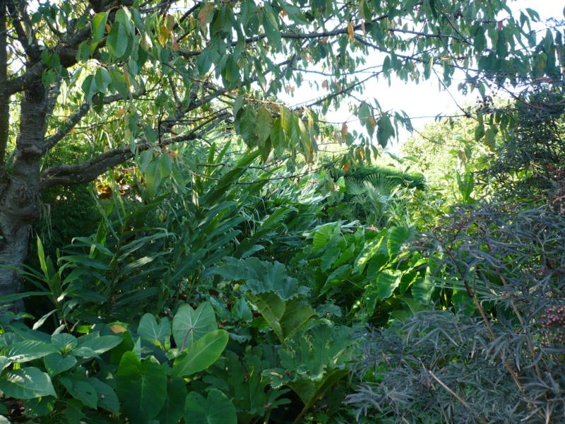 Jardin guiziérois P1000553