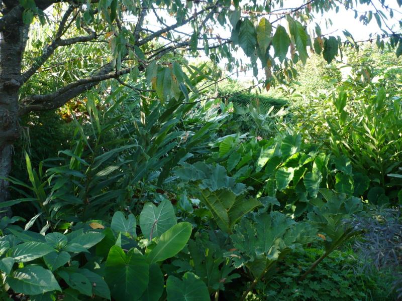 Jardin guiziérois P1000554