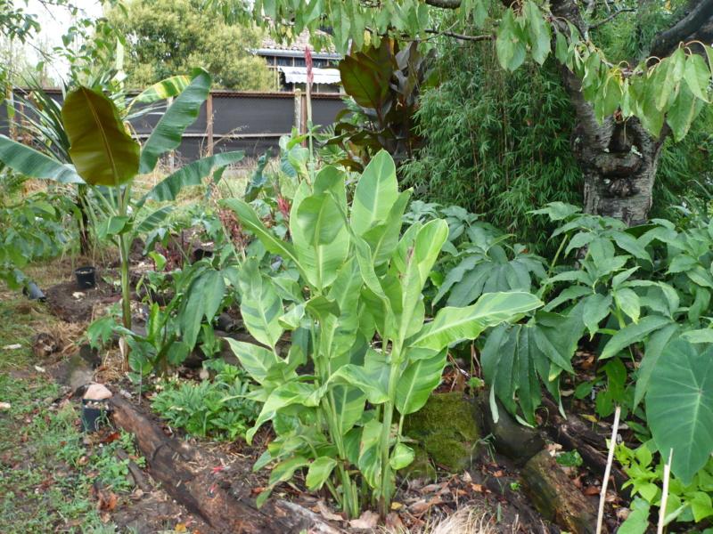 Jardin guiziérois P1000619