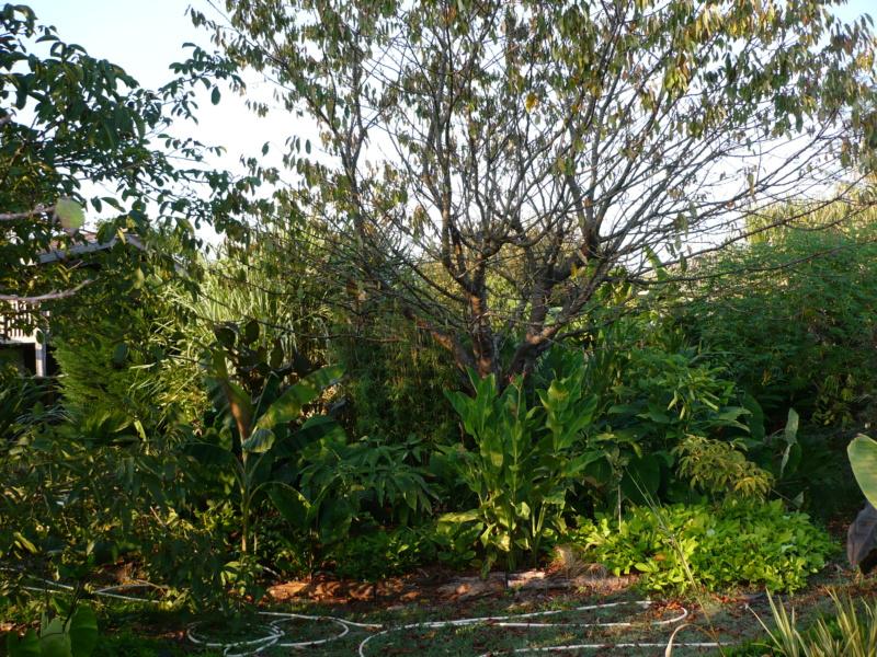 Jardin guiziérois P1000729