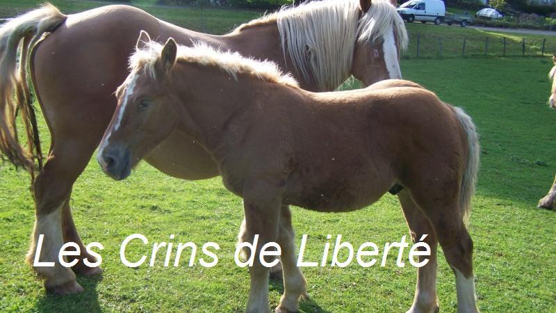 ULY, poulain Comtois, réservé par Rebecca !!!!!!!!! (2008) Uly10