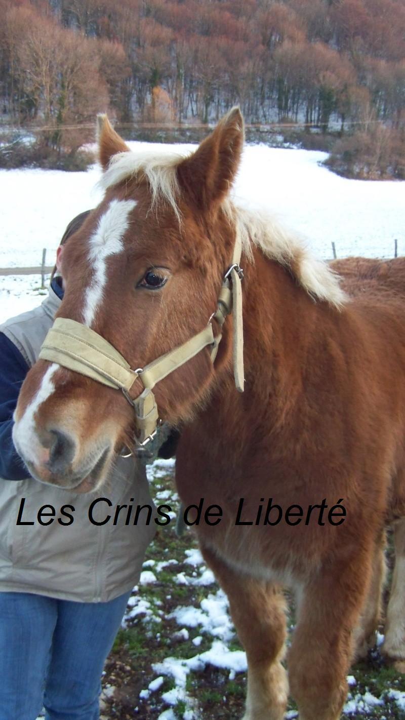 ULY, poulain Comtois, réservé par Rebecca !!!!!!!!! (2008) Uly1010