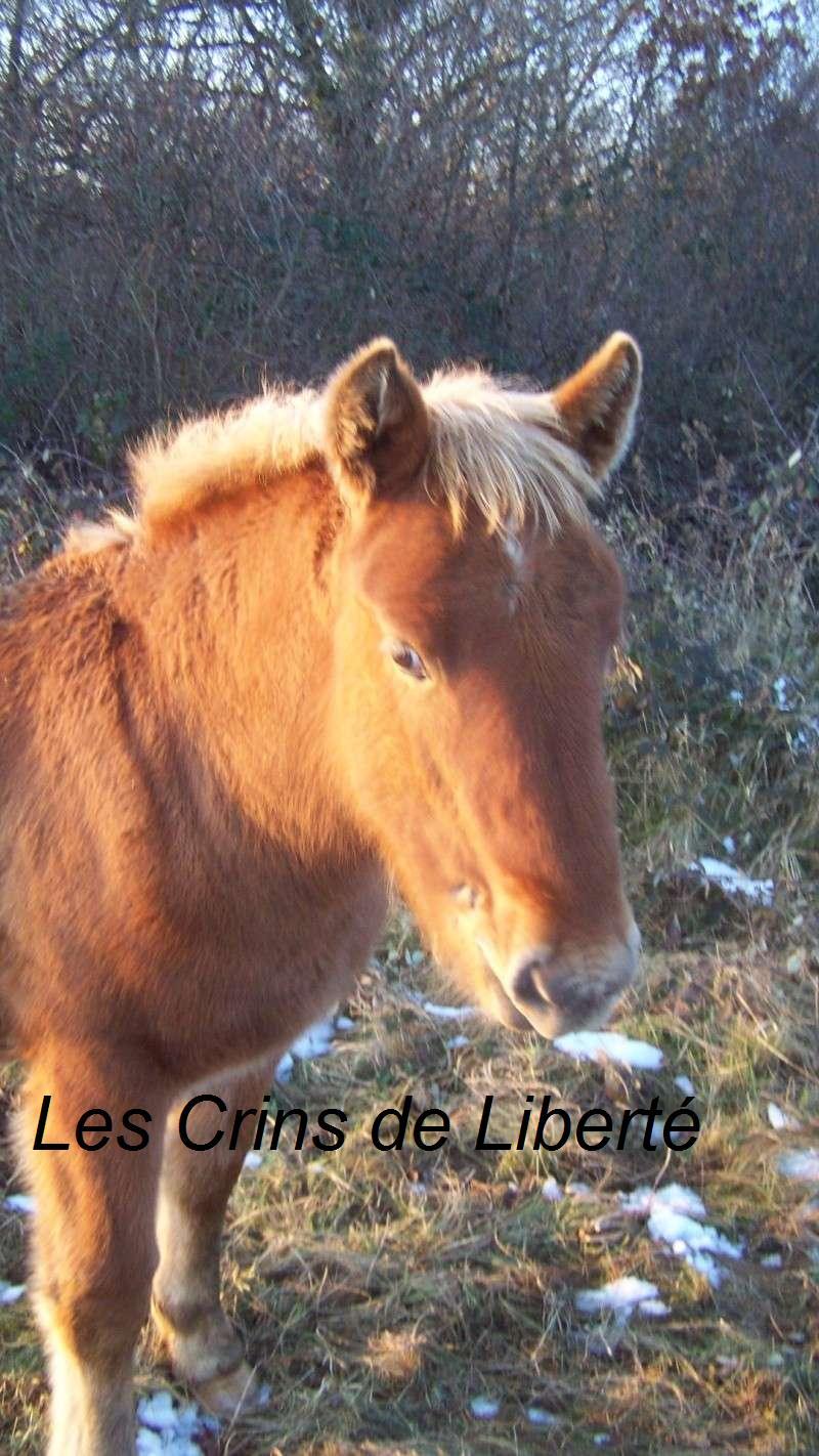 ULYSSE, poulain Comtois, réservé par Rebecca!!!!!!!! (2008) Ulysse10