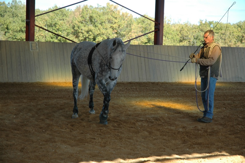 Ce qui est fait avec nos chevaux Dsc_0010