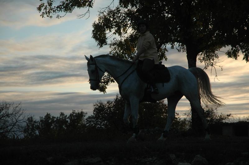 photos chevaux Dsc_0014