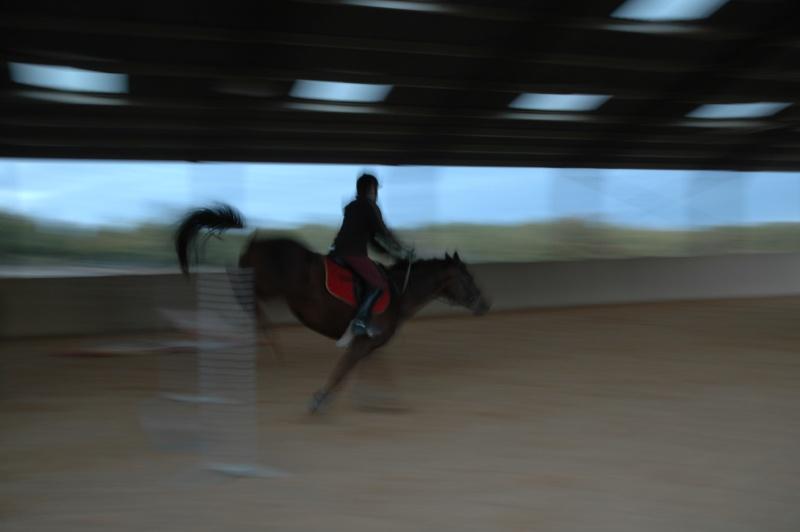 Ce qui est fait avec nos chevaux Dsc_0016