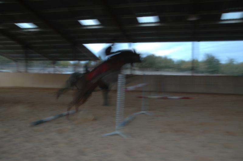 Ce qui est fait avec nos chevaux Dsc_0017