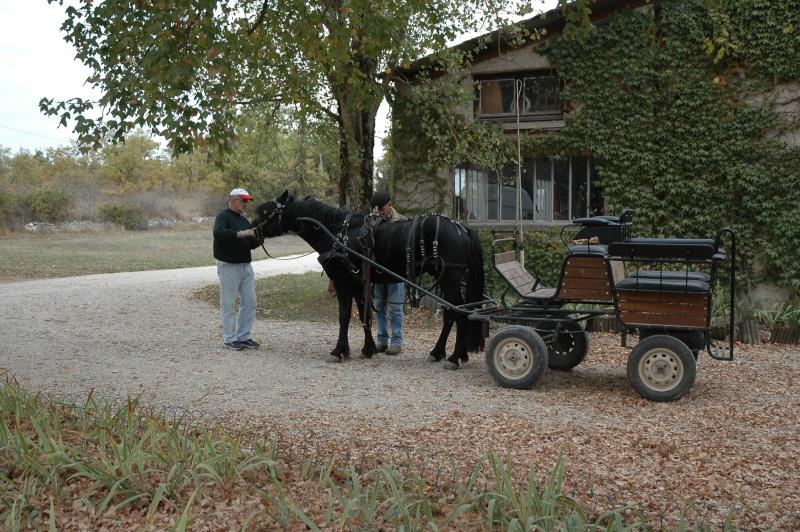 Ce qui est fait avec nos chevaux Dsc_0023
