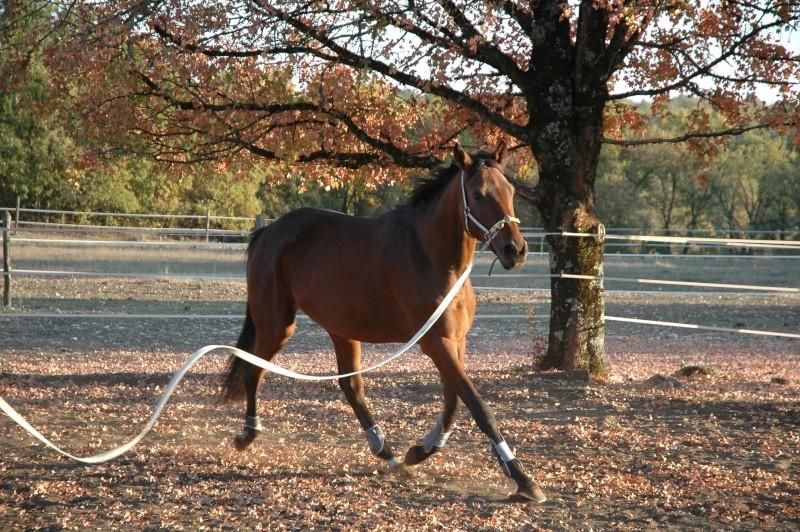Ce qui est fait avec nos chevaux Dsc_0024