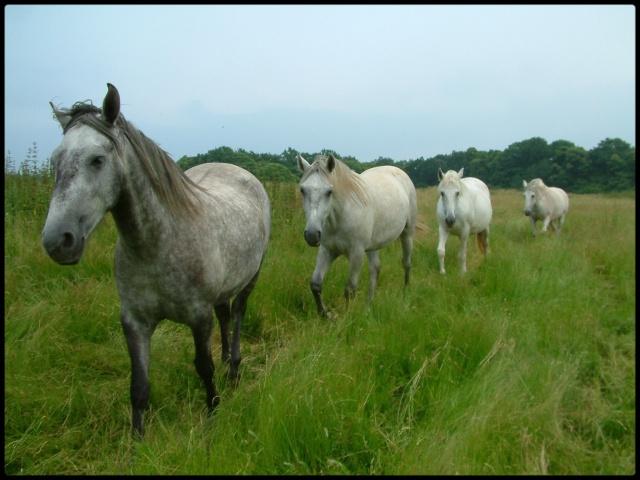 L'équitation & La photographie File_i10