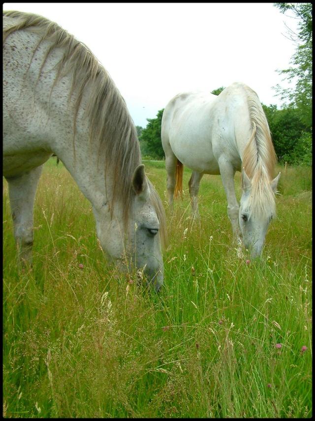 L'équitation & La photographie Gri_gr10