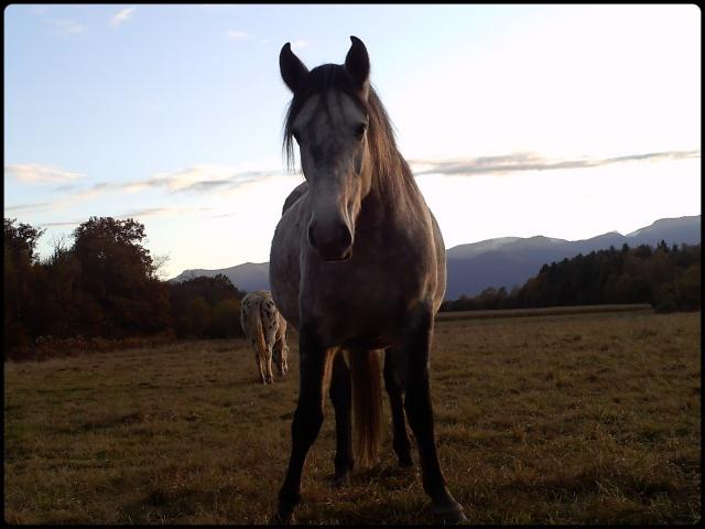 L'équitation & La photographie Ma_bic10